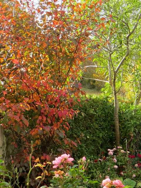 """Concours photos..........""""L'automne"""" !!! France10"""