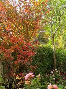"""Concours photos..........""""L'automne"""" !!! France11"""