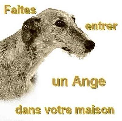 Atila, barbudo beige, 8 ans Scooby France Adopté  - Page 3 Galgo-10