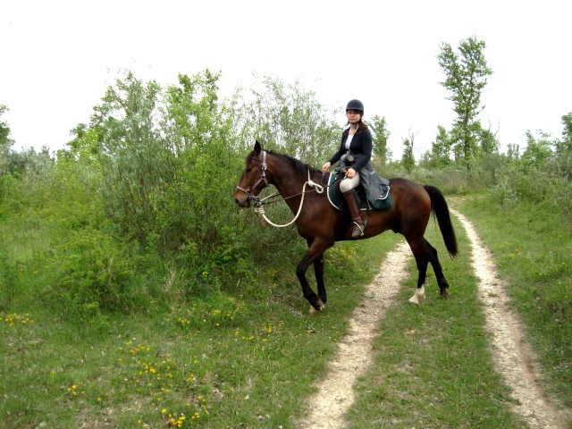 Notre cavalerie Dsc01010