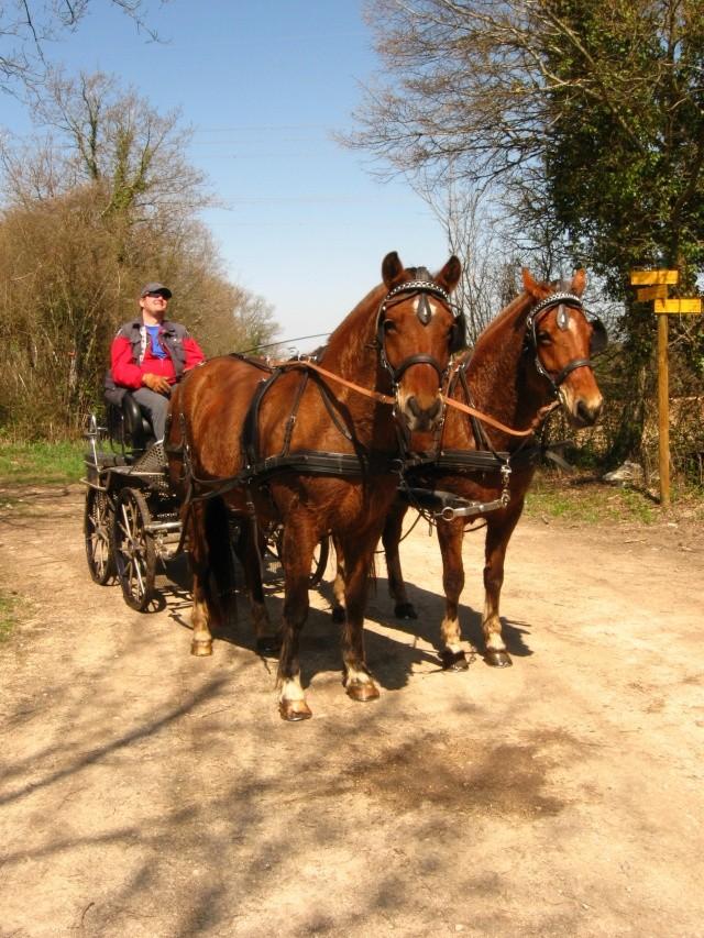 Notre cavalerie Photo_23