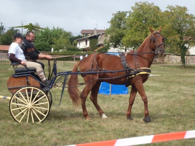 Notre cavalerie Sl370410