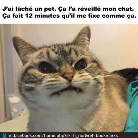 humour - Page 2 12247010