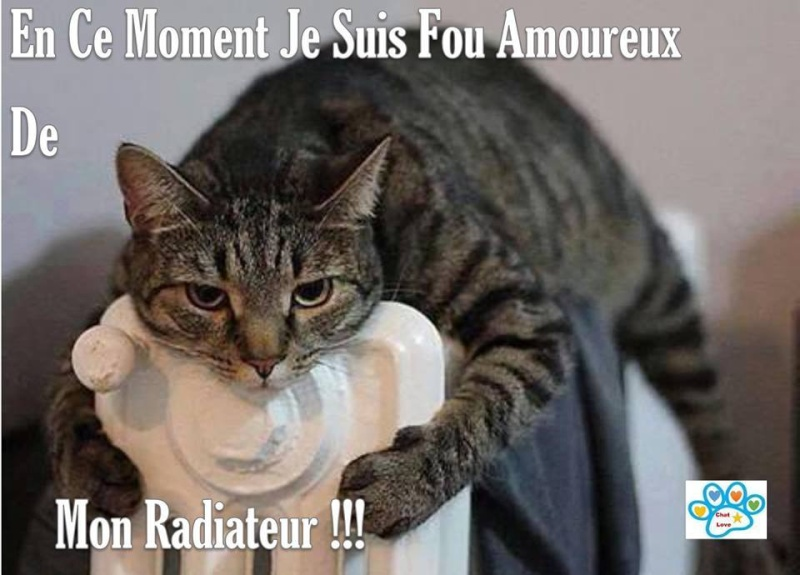 humour - Page 37 12549010