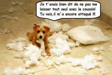 humour - Page 2 12573113