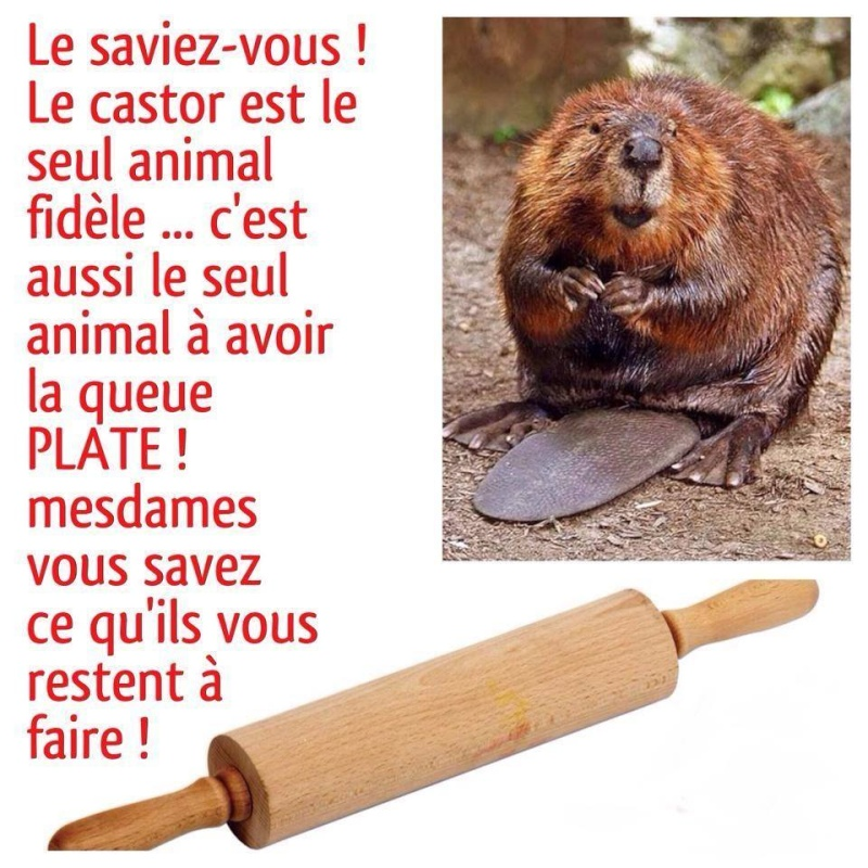 humour - Page 3 12647511