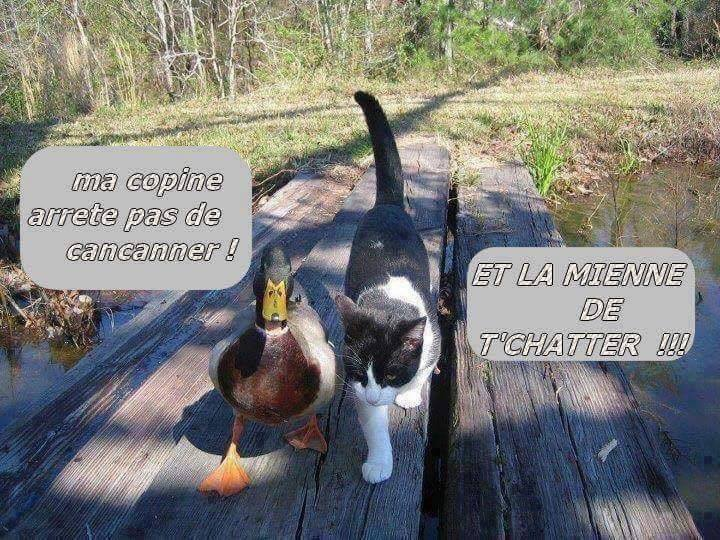 humour - Page 2 12651310