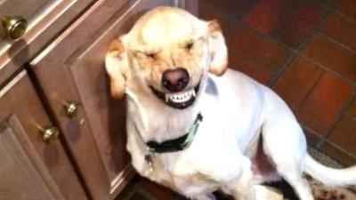 Chien qui sourit: signification - Page 2 400x2210