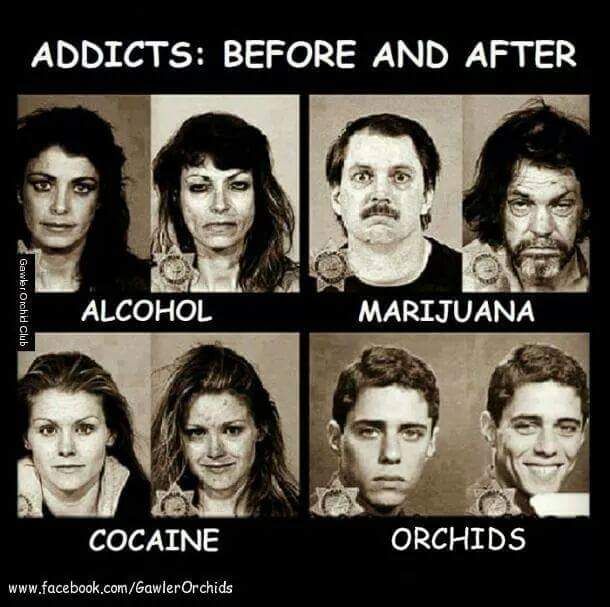 Addiction Addict10