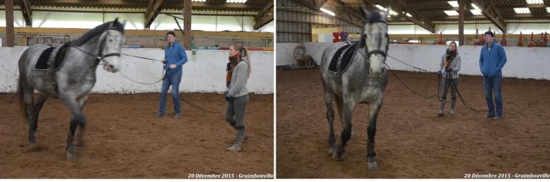 20 Décembre 2015 - Stage longues rênes à Graimbouville Montag11