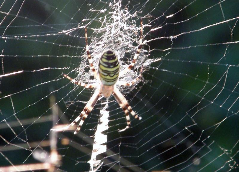 araignée oui mais laquelle P7300012