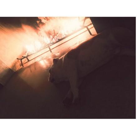 [Instagram Officiel] Instagram  Bill,Tom,Gus,Georg et TH Sans_t48