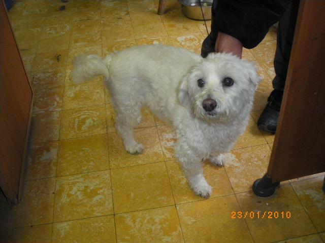 ROCKY, bichon maltais de 9 ans (filleul de Jacqueline) Imgp5110