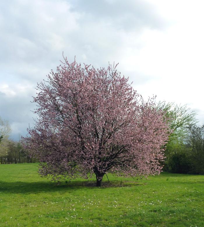 Le printemps est là, Leucojum vernum, Eranthis hyernalis Fleurs17