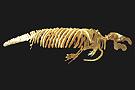 Le salon des paléontologues Vignet12