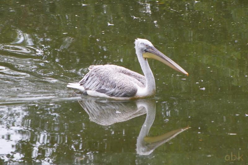 Parc animalier de Sainte-Croix  ( Rhodes 57 ) Parc_s12