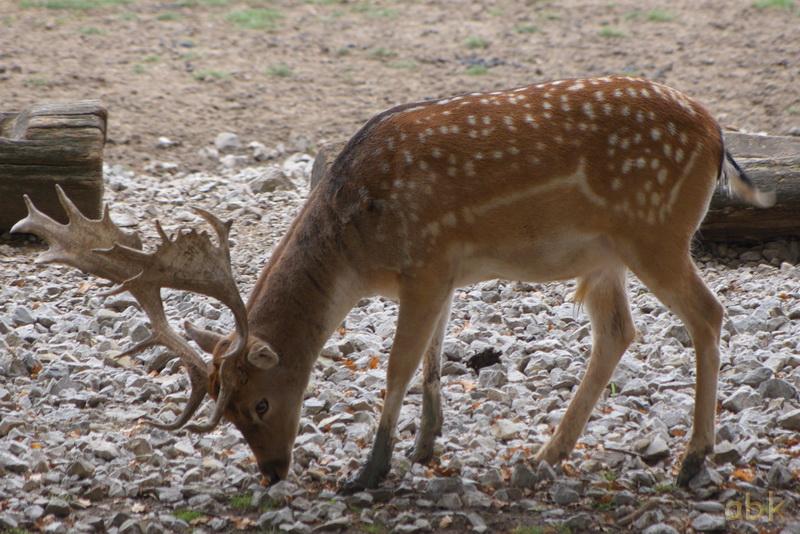Parc animalier de Sainte-Croix  ( Rhodes 57 ) Parc_s13
