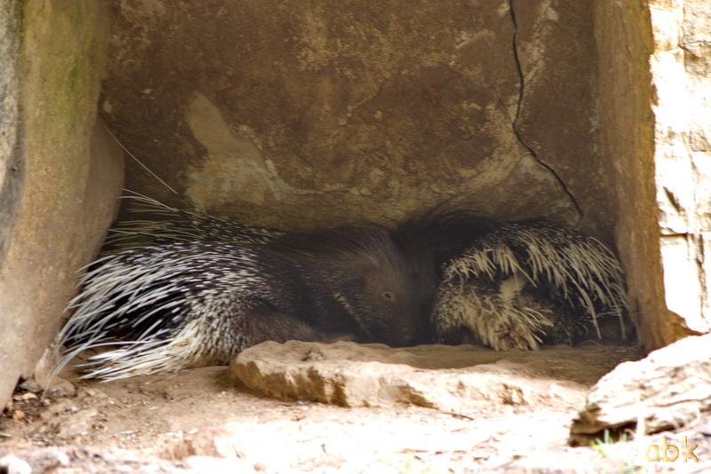 Parc animalier de Sainte-Croix  ( Rhodes 57 ) Parc_s14