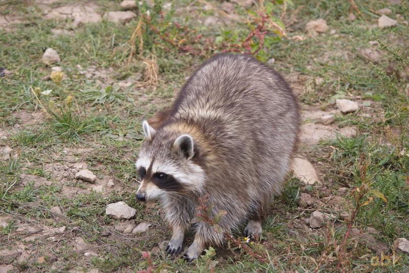 Parc animalier de Sainte-Croix  ( Rhodes 57 ) Parc_s17
