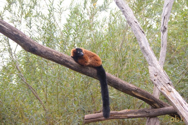 Parc animalier de Sainte-Croix  ( Rhodes 57 ) Parc_s21