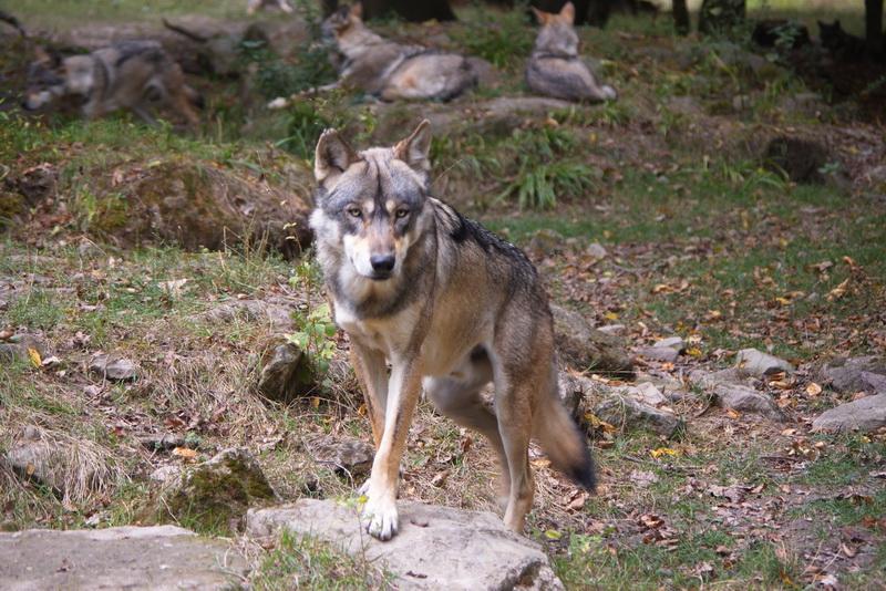 Parc animalier de Sainte-Croix  ( Rhodes 57 ) Parc_s22