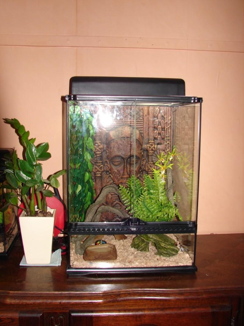 mon nouveau terrarium Dsc00114