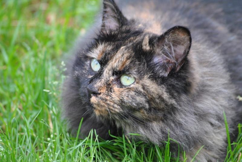 Kitty Cat, née le 1er août 2010 STATUT :CHAT LIBRE - Page 2 Dsc_0010