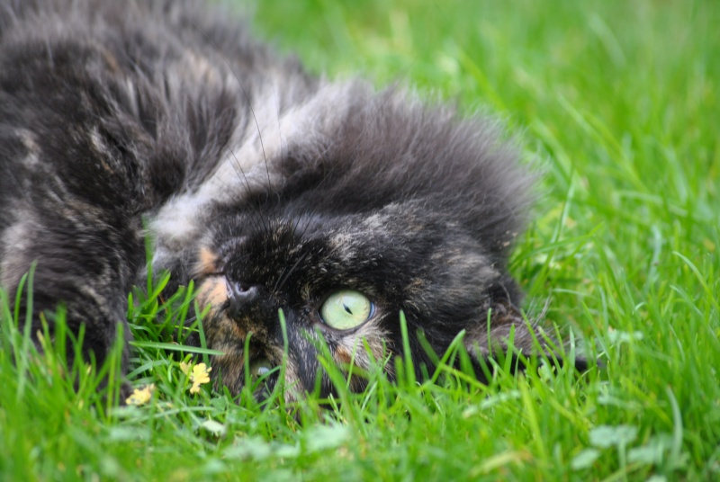 Kitty Cat, née le 1er août 2010 STATUT :CHAT LIBRE - Page 2 Dsc_0014