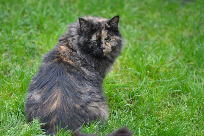 Kitty Cat, née le 1er août 2010 STATUT :CHAT LIBRE - Page 3 Dsc_0017