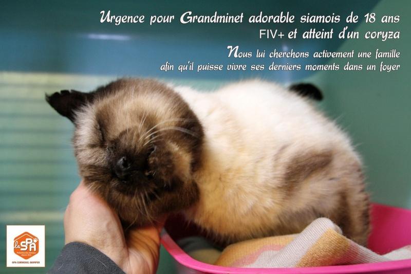 GRANDMINET 18 ans FIV Corniquel Quimper 29 12525110