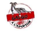 Nos Galgos