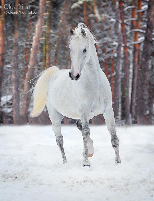 Don de photo Winter10