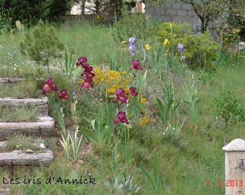 Iris 'Vibrations' - Mary Dunn 1989 Dsc02210