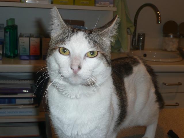Jeune chat superrrrr calin cherche une famille ! P1110110