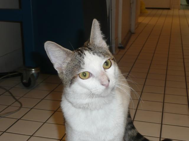 Jeune chat superrrrr calin cherche une famille ! P1110111