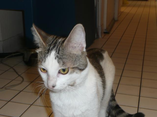 Jeune chat superrrrr calin cherche une famille ! P1110112