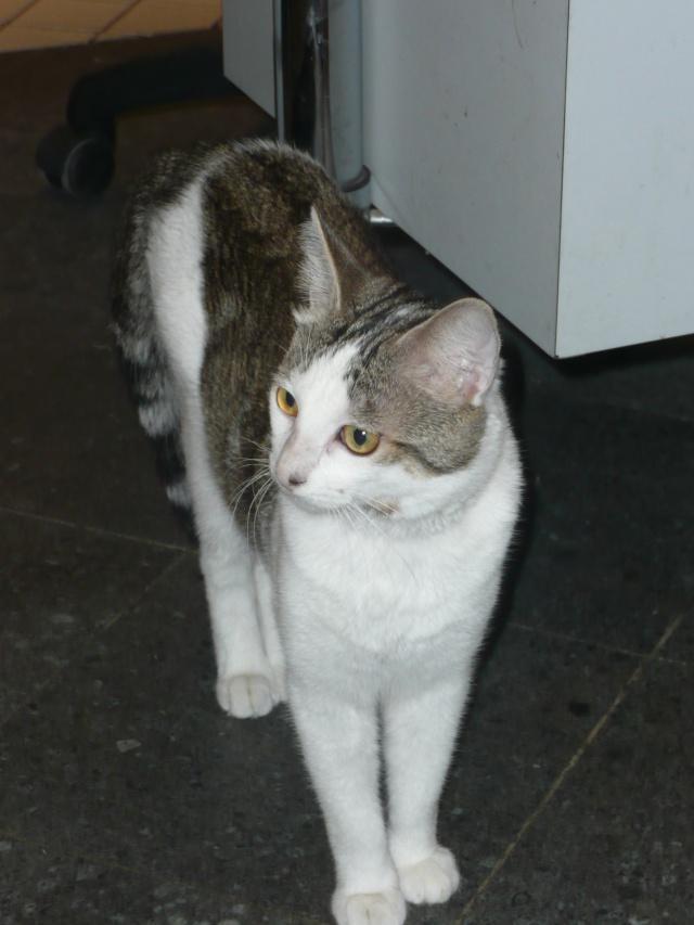 Jeune chat superrrrr calin cherche une famille ! P1110113
