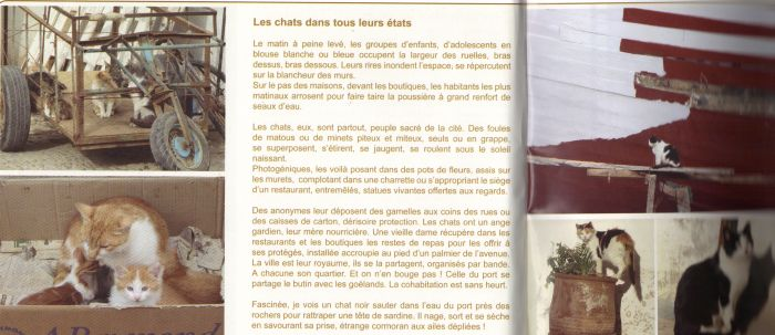 Les Chats d'Essouira 23-02-11