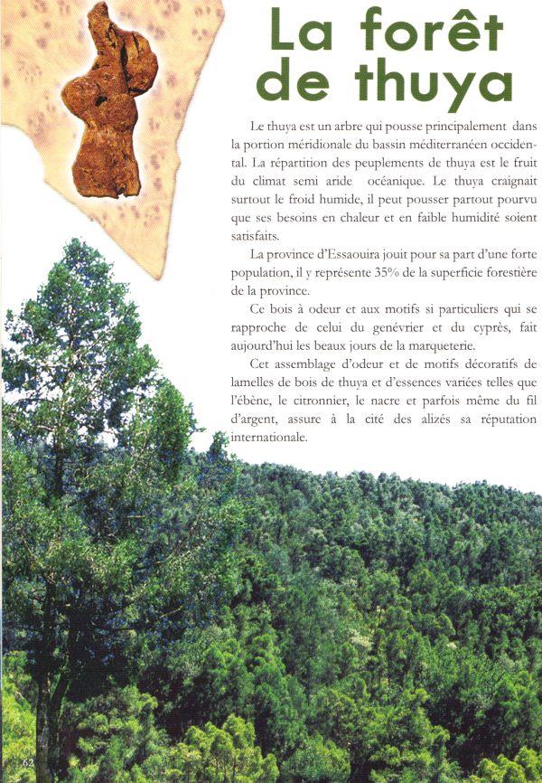 L'Art du Araar thuya 24-02-10