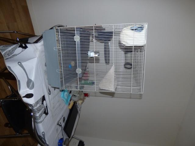 echange cage jenny contre une rat 80 P1000111