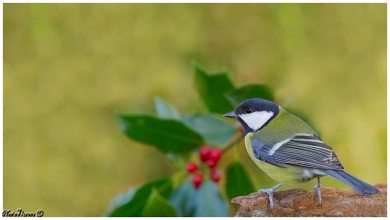 Les oiseaux chantent - Page 2 Charbo10