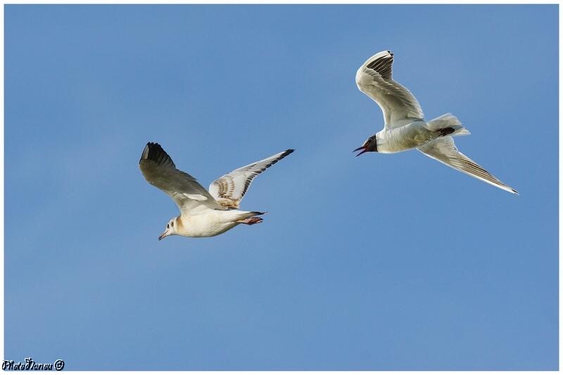 Les oiseaux chantent - Page 2 Duo_yo10