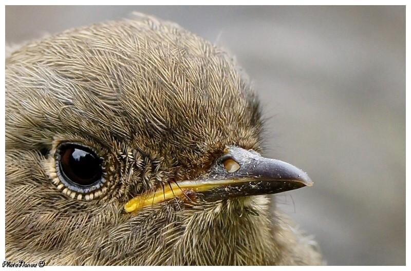 Les oiseaux chantent Gros_p10