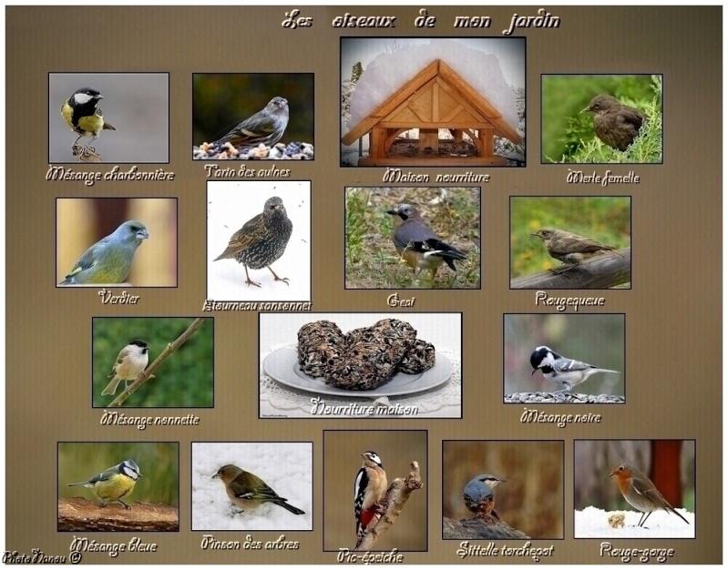 Les oiseaux chantent Les_oi11