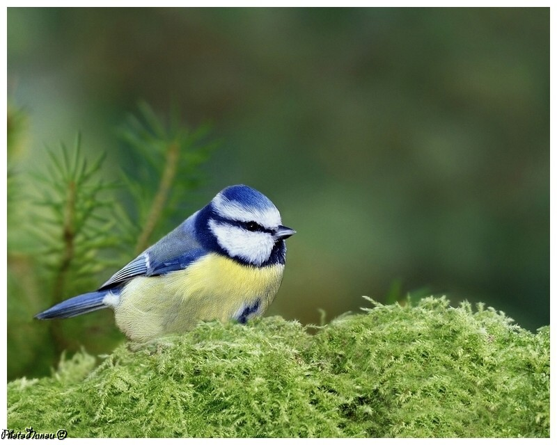 Les oiseaux chantent Mysang10