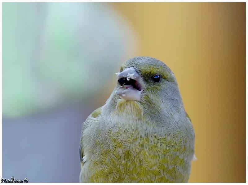 Les oiseaux chantent Verdie10