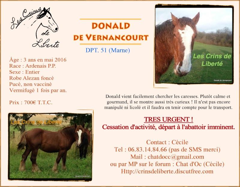 Dpt 51, 3 ans, Donald de Vernancourt, ardennais, réservé par Luisia (Août 2016) - Page 2 Donald11