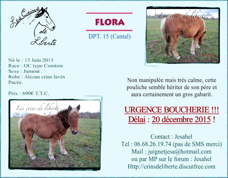 Dpt 14, Persane de l'IF, dpt 15 Flora 45 et maellepm (Janvier 2016) Flora10