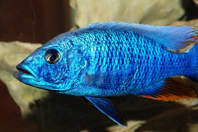 Petites nouvelles de ma fish room... - Page 5 Fryeri10