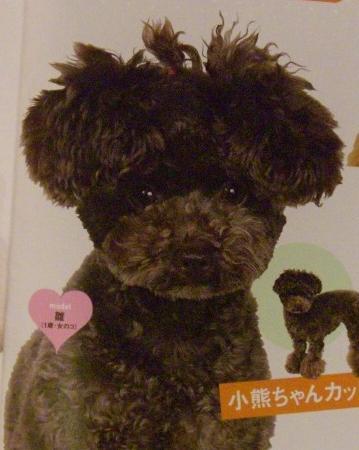 Poodle grooming styles Hairdt10